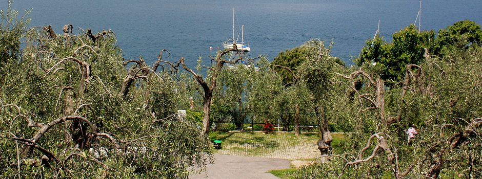 Camping am Gardasee in Olivenhain